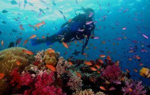 Arrecife de coral en los roques